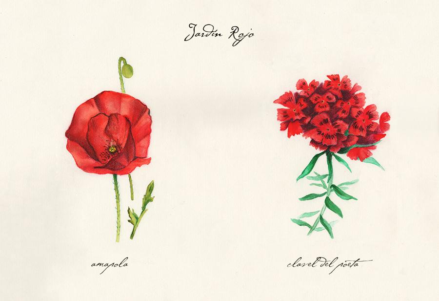 Ilustración a acuarela de el jardín rojo. Muestra dos flores: amapola y clavel del poeta.