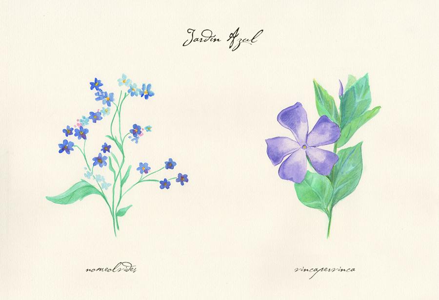 Ilustración a acuarela de el jardín azul. Muestra dos flores: nomeolvides y vincapervinca.
