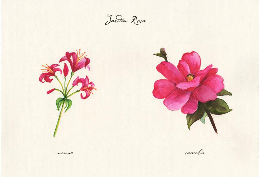 Ilustración a acuarela de el jardín rosa. Muestra dos flores: nerine y camelia.