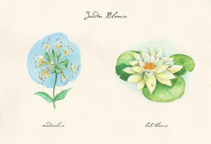 Ilustración a acuarela de el jardín blanco. Muestra dos flores: madreselva y loto blanco.