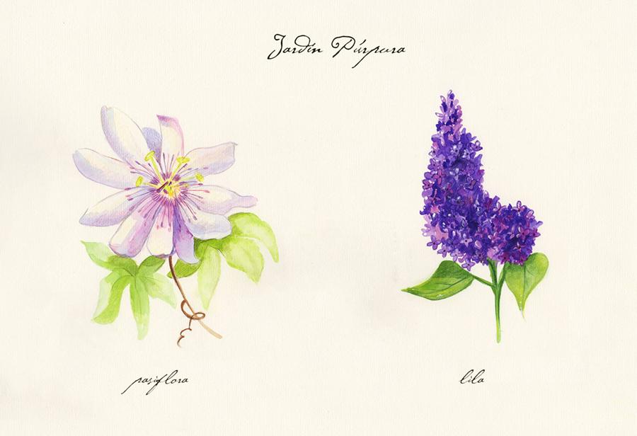 Ilustración a acuarela de el jardín púrpura. Muestra dos flores: pasifora y lila.